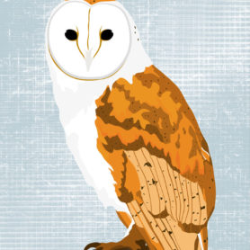 Poster Design by Life Lurking Barn Owl